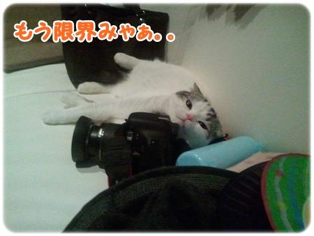 4_20121027015519.jpg