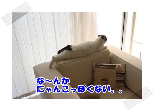 4_20121106233301.jpg
