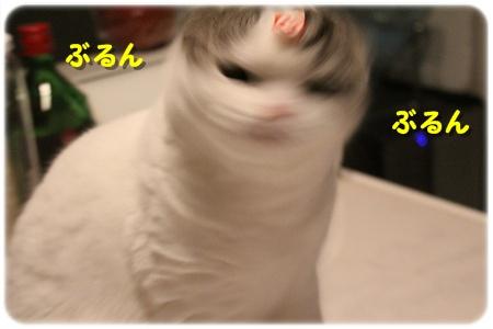 4_20121202025802.jpg