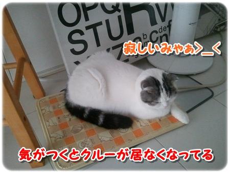 4_20121203011911.jpg