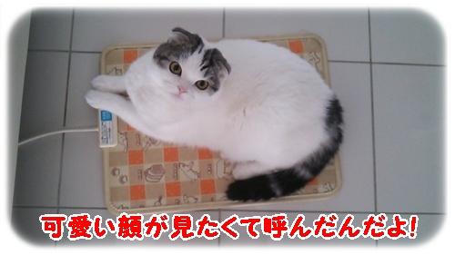 4_20130109004738.jpg