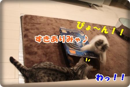 5-004_20121110005046.jpg