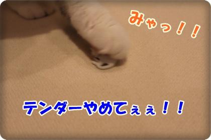 5-005_20120603003220.jpg