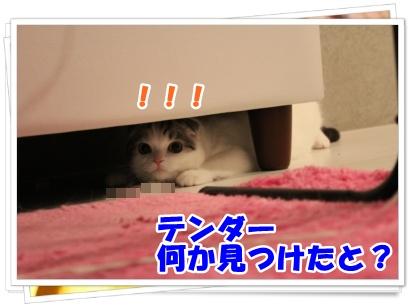 5-005_20120616183913.jpg
