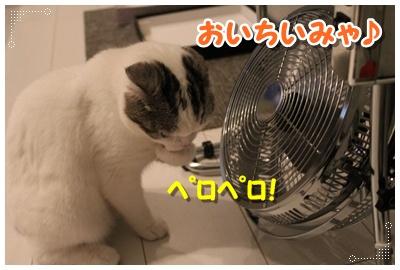 5_20120801204752.jpg