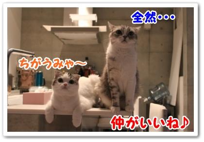 5_20121020000302.jpg
