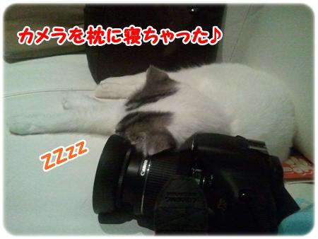 5_20121027015518.jpg