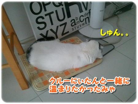 5_20121203011910.jpg