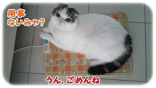 5_20130109004737.jpg