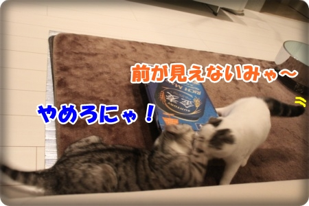6-005_20121110005045.jpg