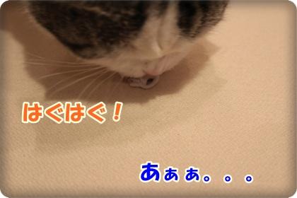 6-006_20120603003219.jpg