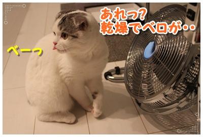 6_20120801204752.jpg