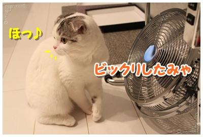 7_20120801204802.jpg