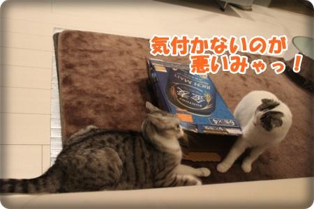 8-007_20121110005102.jpg