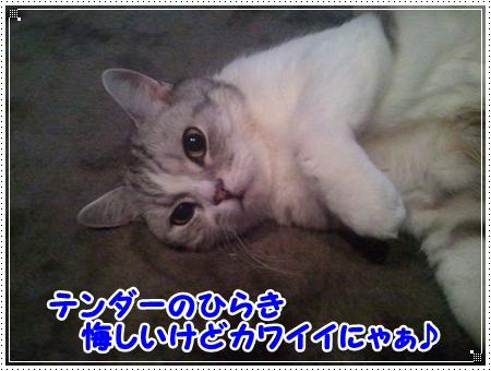 8_20120805171249.jpg