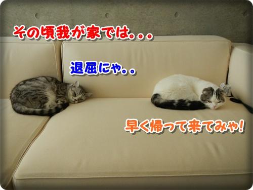 DSCN0255_20121213001434.jpg