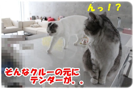 IMG_0412-002.jpg
