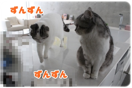 IMG_0416-003.jpg