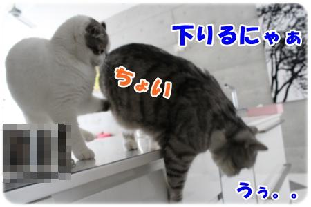 IMG_0438-007.jpg