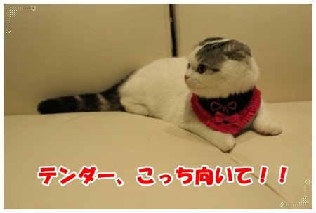 IMG_2419-001.jpg