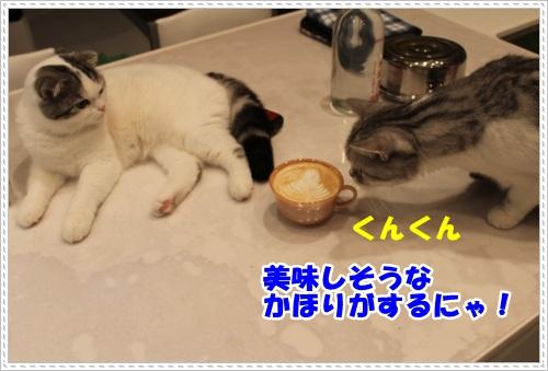 IMG_2491-004.jpg