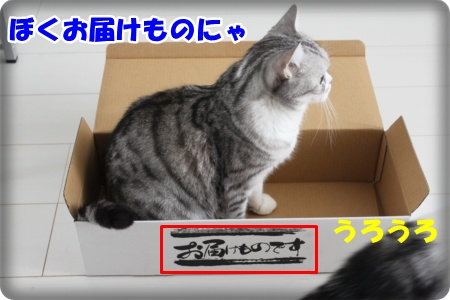 IMG_3511-001.jpg