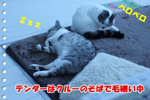 IMG_3734-009.jpg