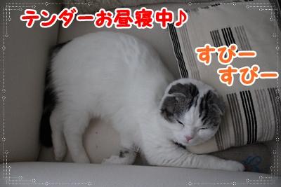 IMG_3738_20120724003233.jpg