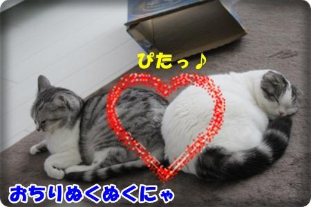 IMG_4778-003.jpg