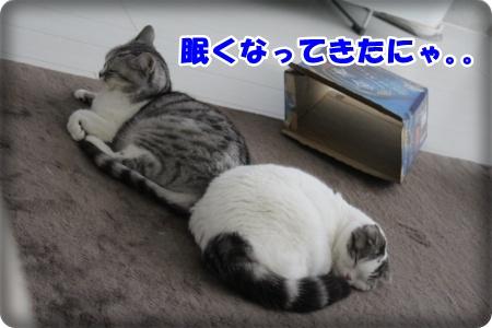 IMG_4779-005.jpg