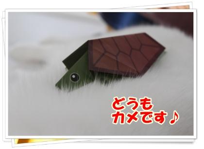 IMG_5581-004.jpg