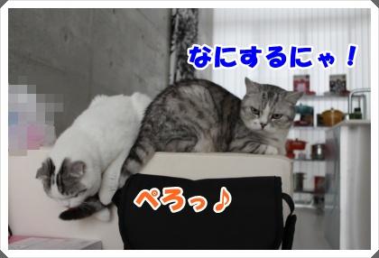 IMG_6450-002.jpg