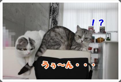 IMG_6451-003.jpg