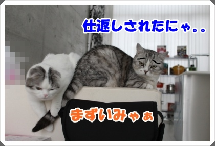 IMG_6452-004.jpg