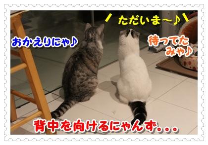 IMG_6923_20120710020549.jpg