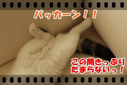 IMG_7693-006.jpg
