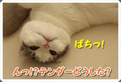 IMG_7709.jpg