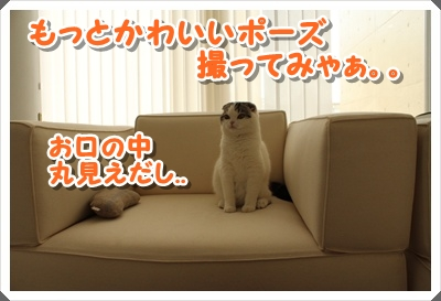 IMG_7716.jpg