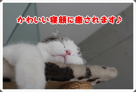 IMG_7998.jpg