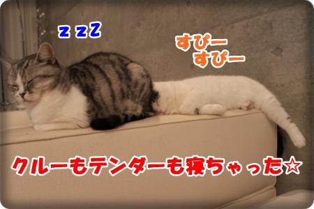IMG_9031-006.jpg