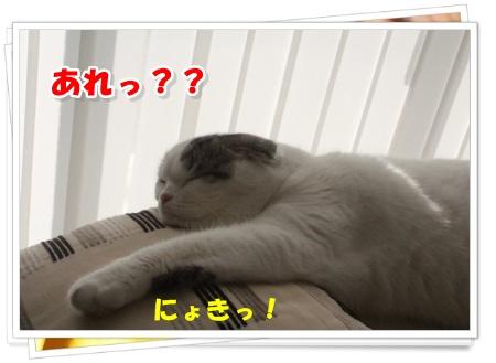 IMG_9393-004.jpg