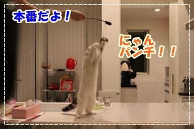 IMG_9493-010.jpg
