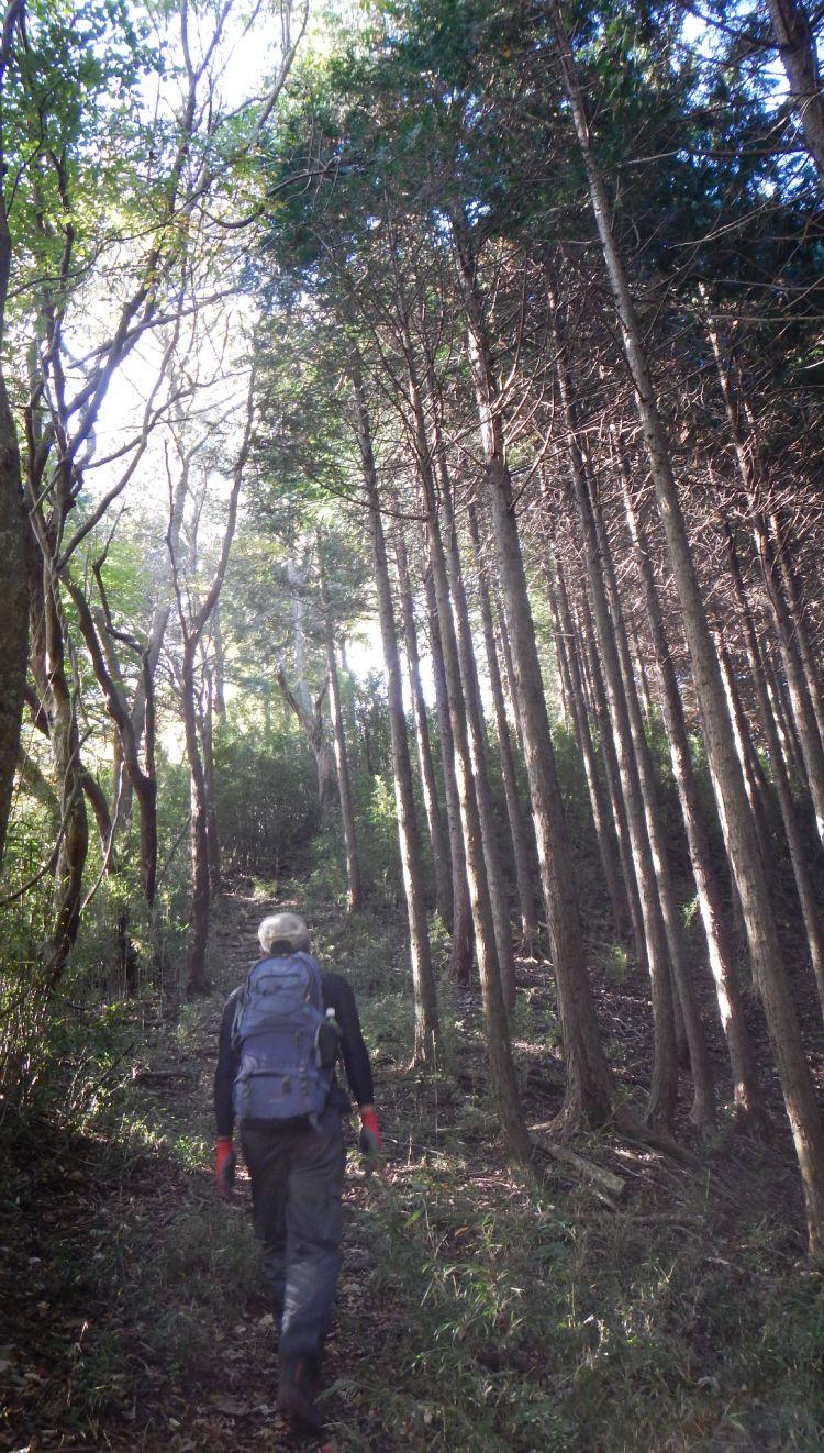 大野山04