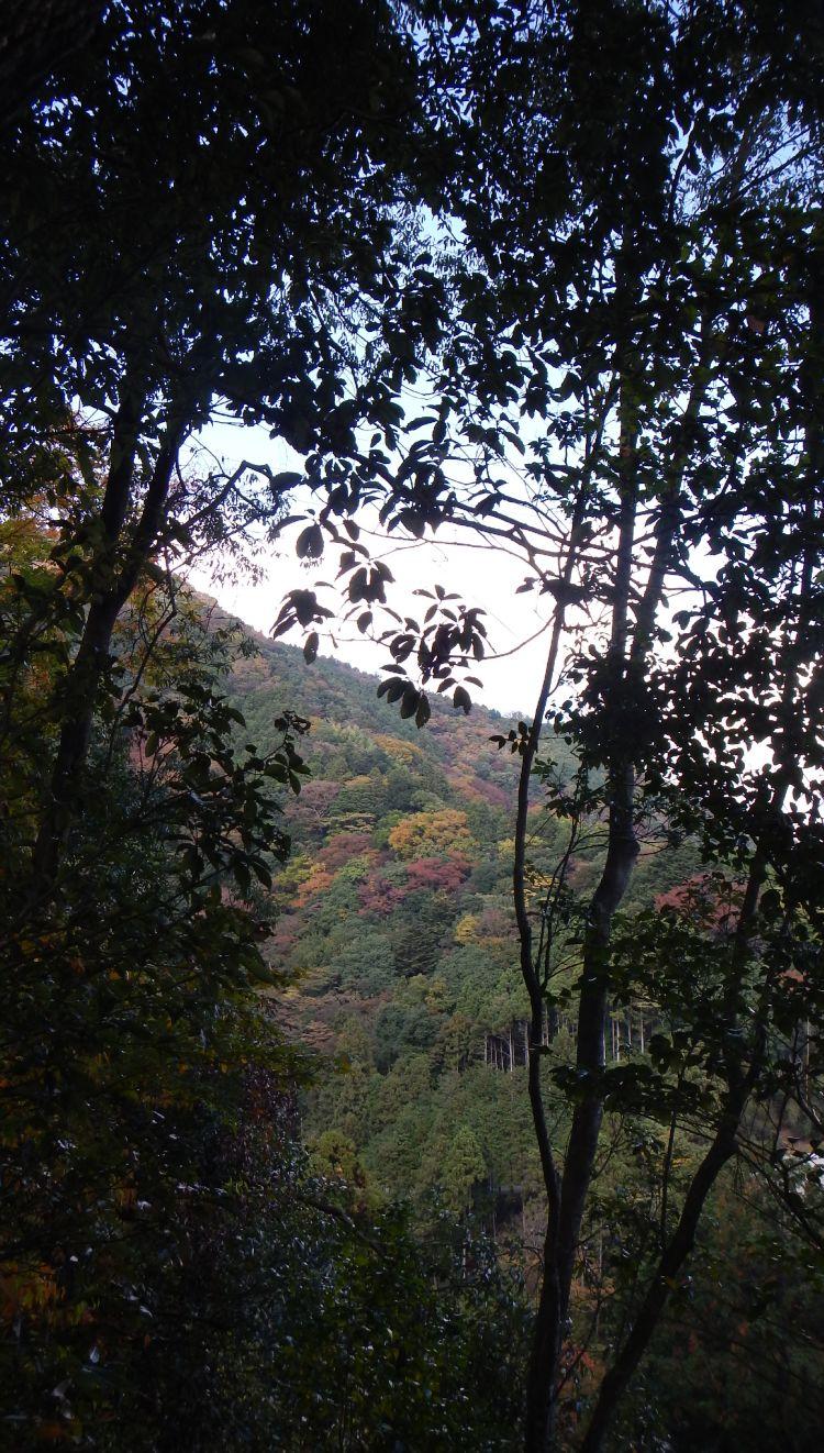 大野山22