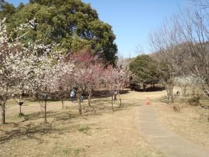 00近くの公園梅の花花