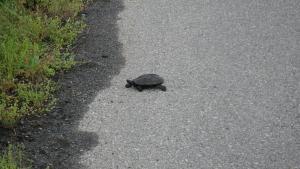 008亀が道路を横断