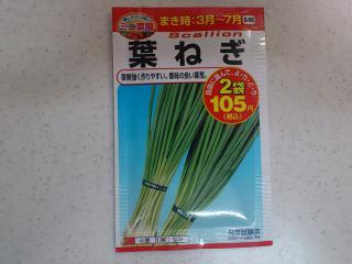 20130304_葉ねぎの種まき1