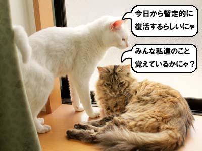 cat3886.jpg