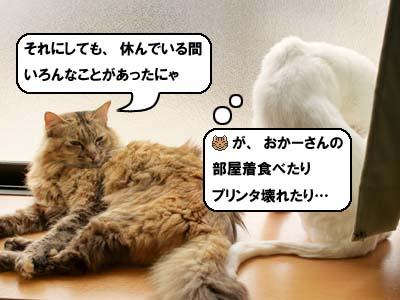 cat3887.jpg