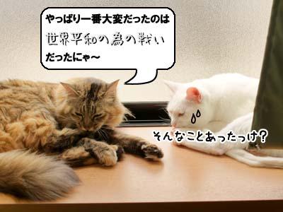 cat3888.jpg